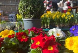 jardinerie de Taconnaz